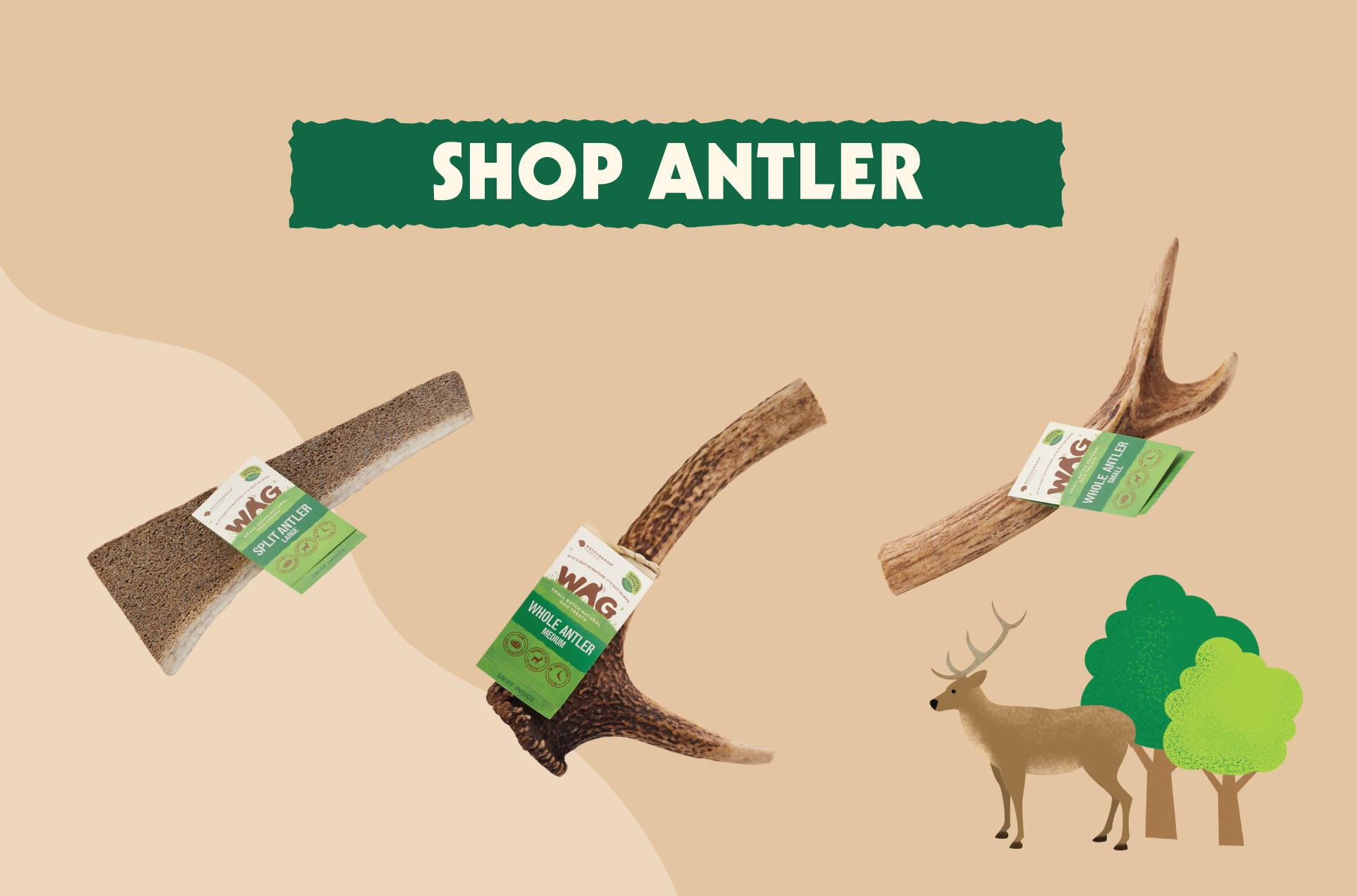 shop antler