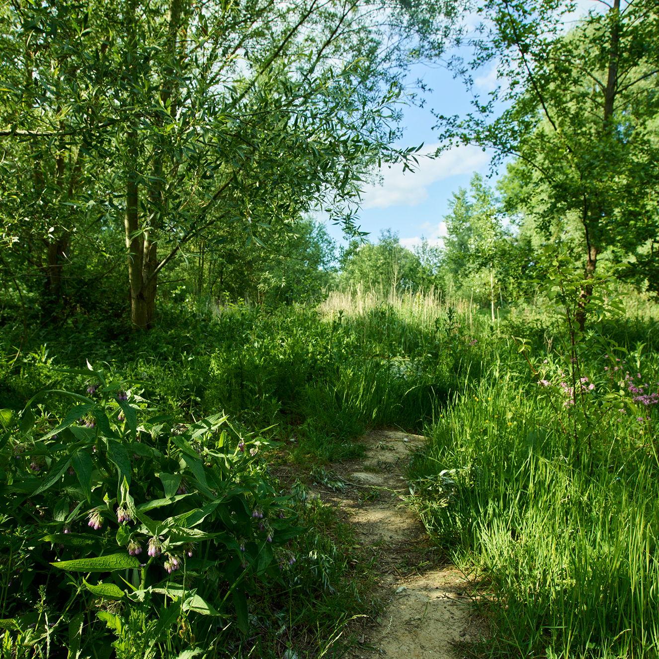 Picnic and Walk