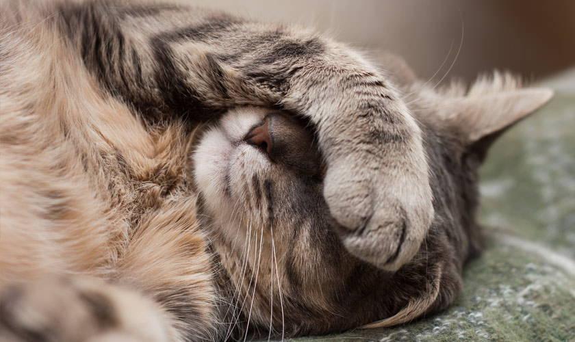 Gewichtsverlust und Haarausfall bei Katzen natürliche Behandlung