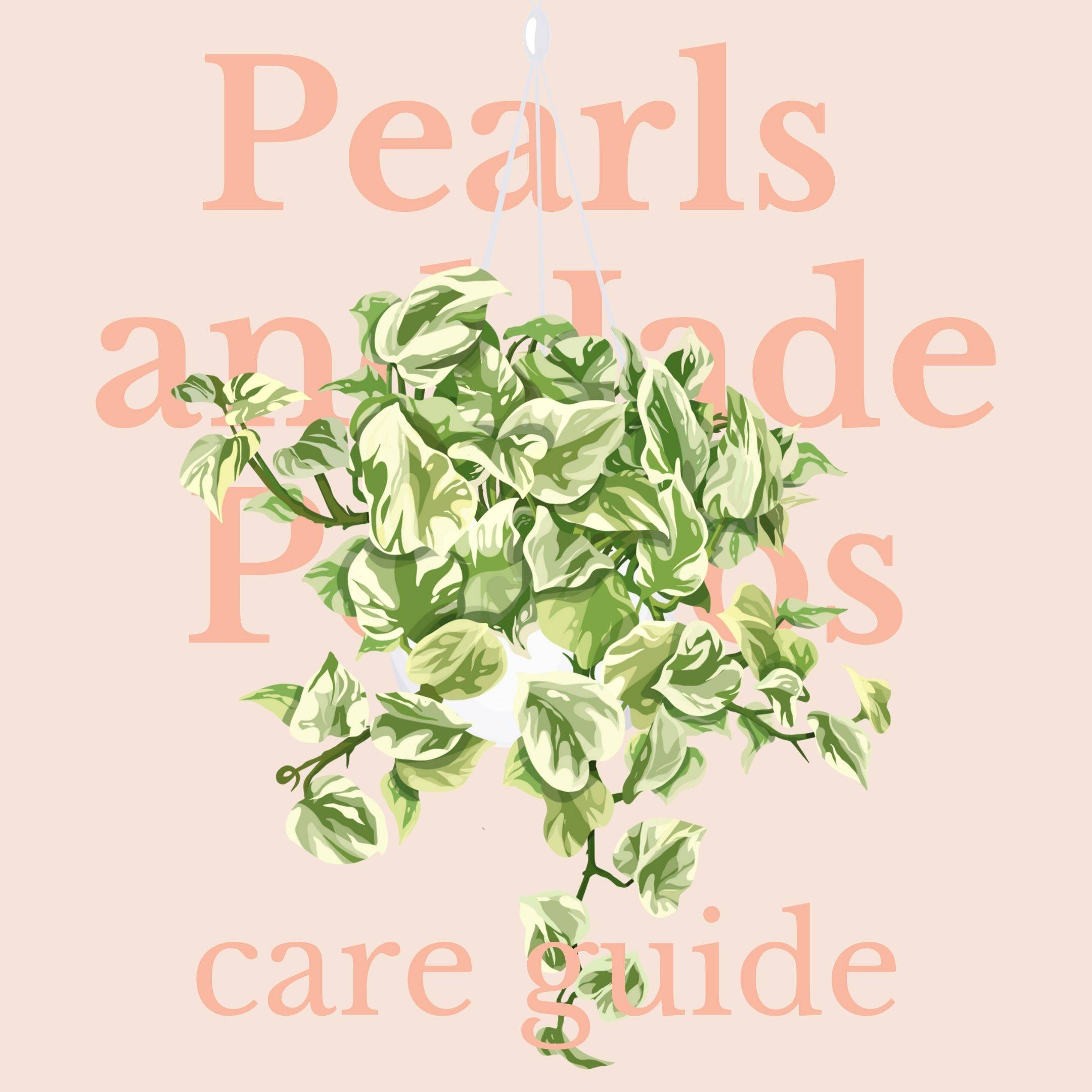 Drawing of pearls and jade pothos