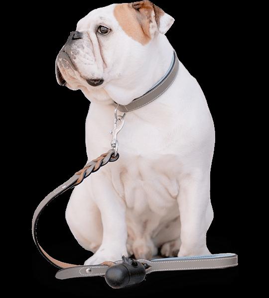 crayolex-hemp-cbd-dog