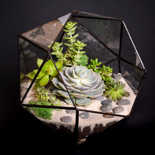 Флорариум с суккулентами Алмаз