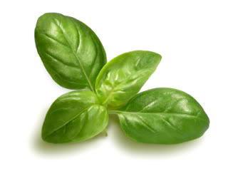 Herbs an Essential Oils – Divining Oil Designs