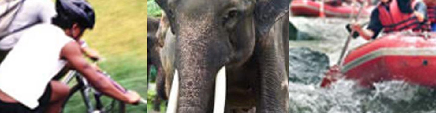 3в1 Велотур, Сафари на слонах и Рафтинг