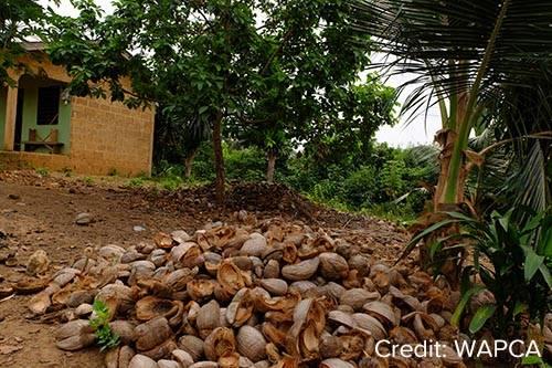 coconut husks in Ghana