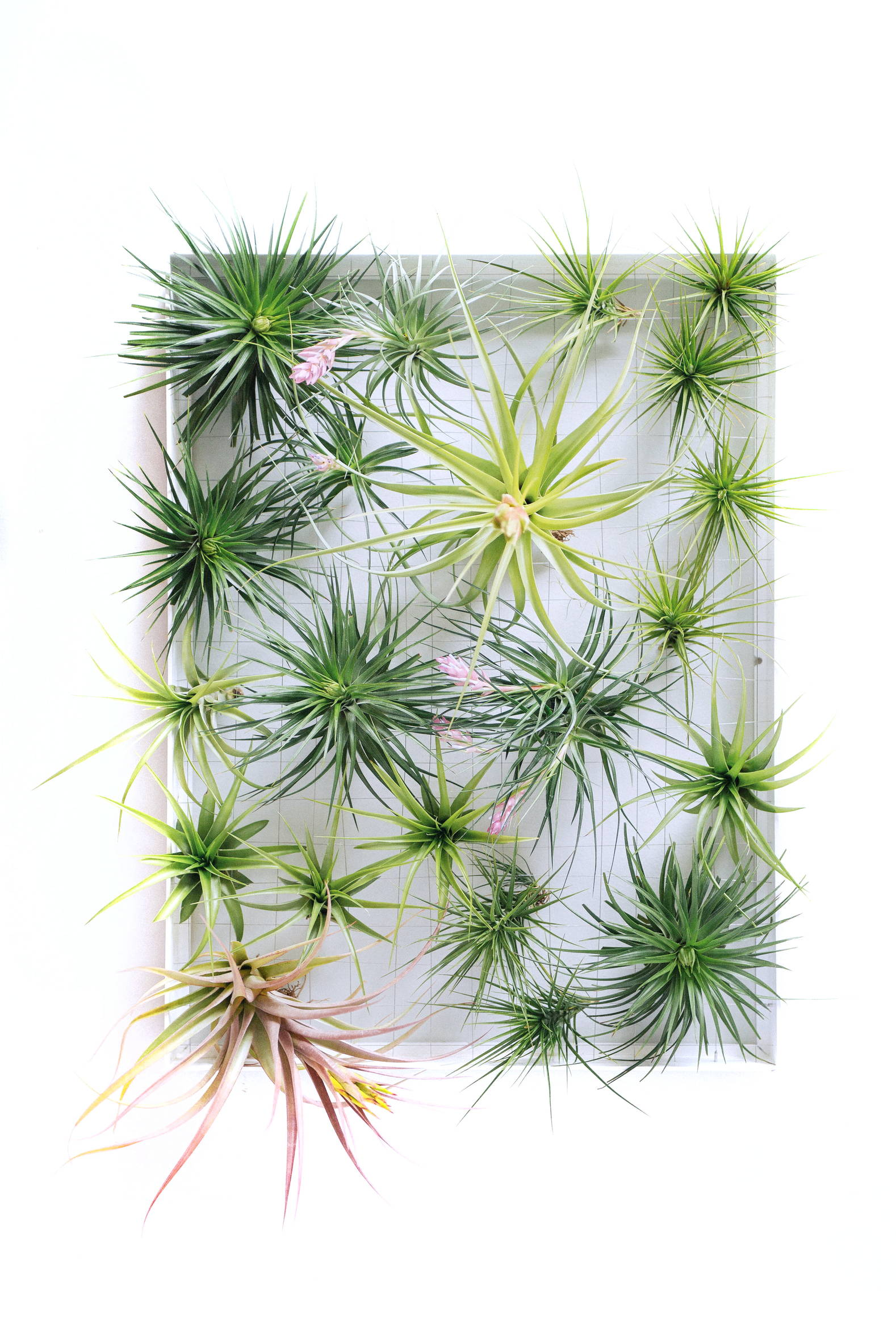 airplant frame large airplantman