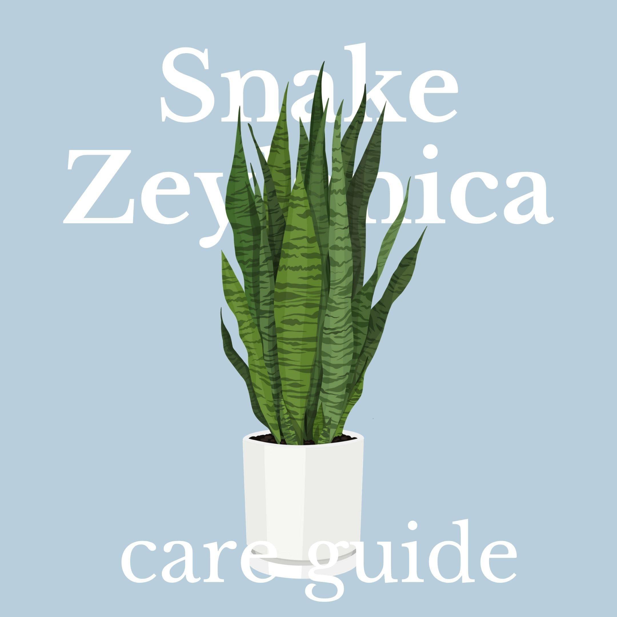 Drawing of Snake Zeylanica