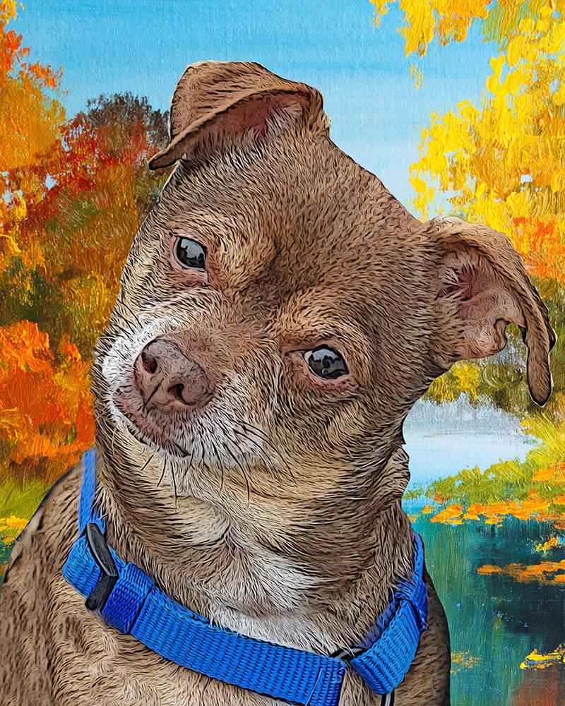 dog portrait - river