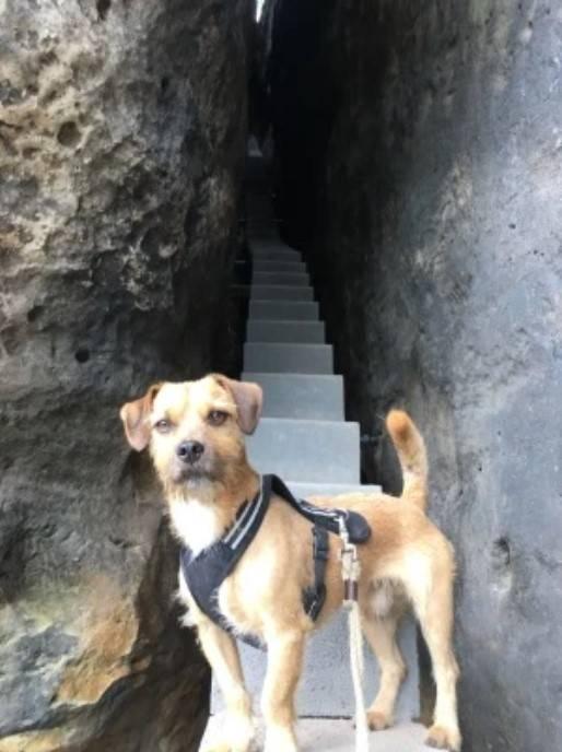 Elbsandsteingebirge Wandern mit Hund