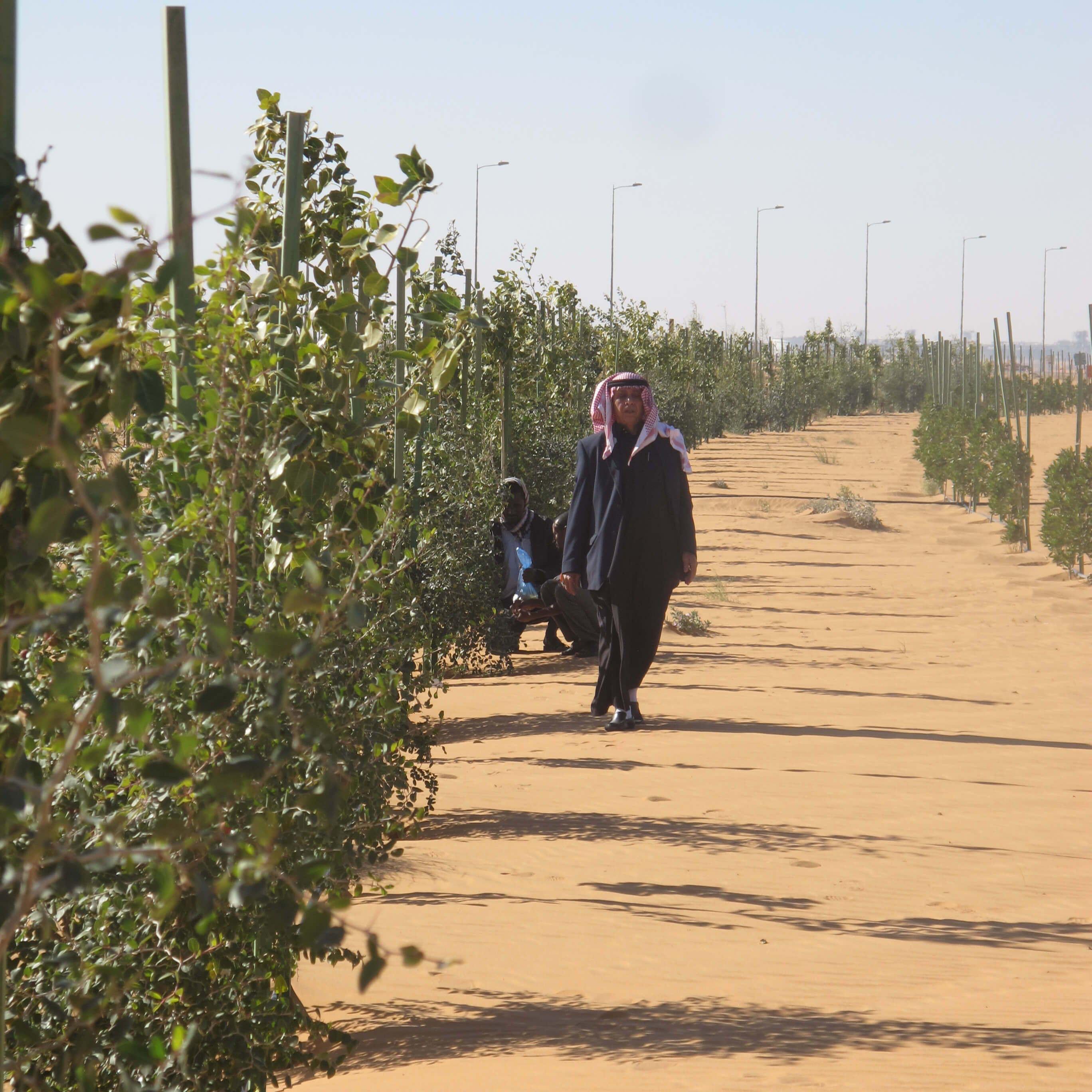 Ibrahim walking through his desert greening project.