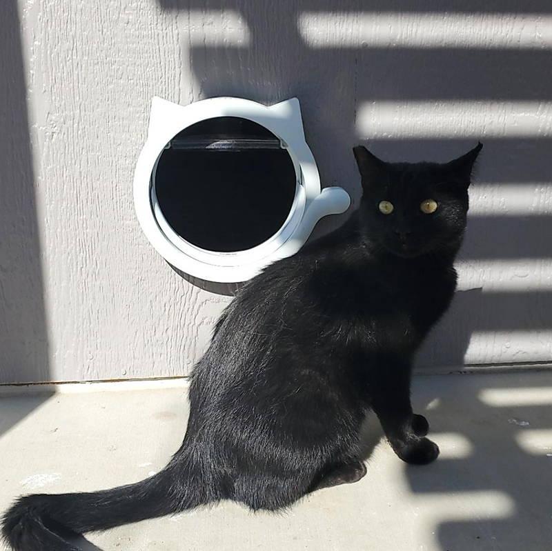 Cute White Cat Door