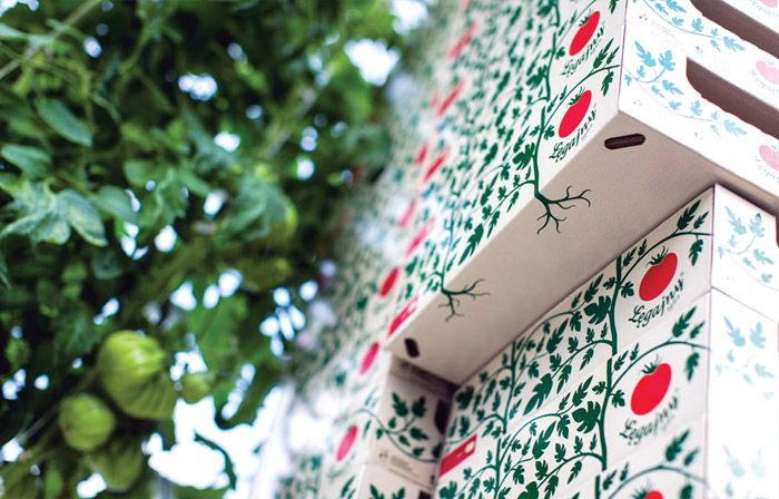 06 Ostaszewska Olszewska Konarska Minasowicz Legajny Tomato Farm Packaging RED DOT
