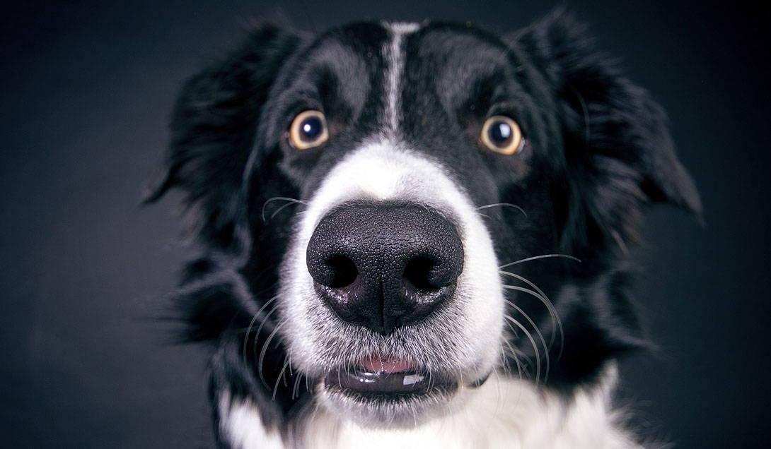 Welche Hunde stecken sich meistens an Giardien an?