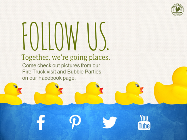 Plastic ducks in a row with social media icons below them asking to check out our Facebook to see pictures