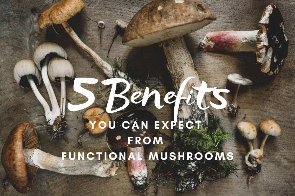 Functional mushrooms arranged on wooden table