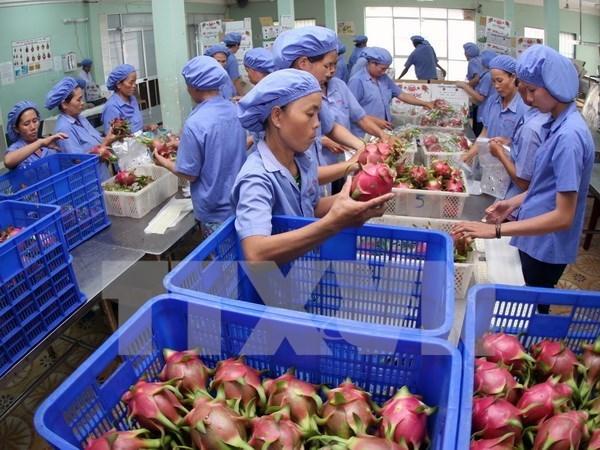 Fruit, vegetable exports top USD 1.6 billion