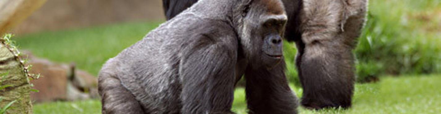 Посещение африканского зоопарка и биопарка и школы верховой езды