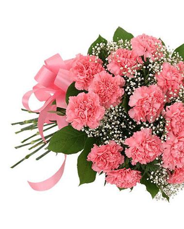 HF Dozen Pink Carnations