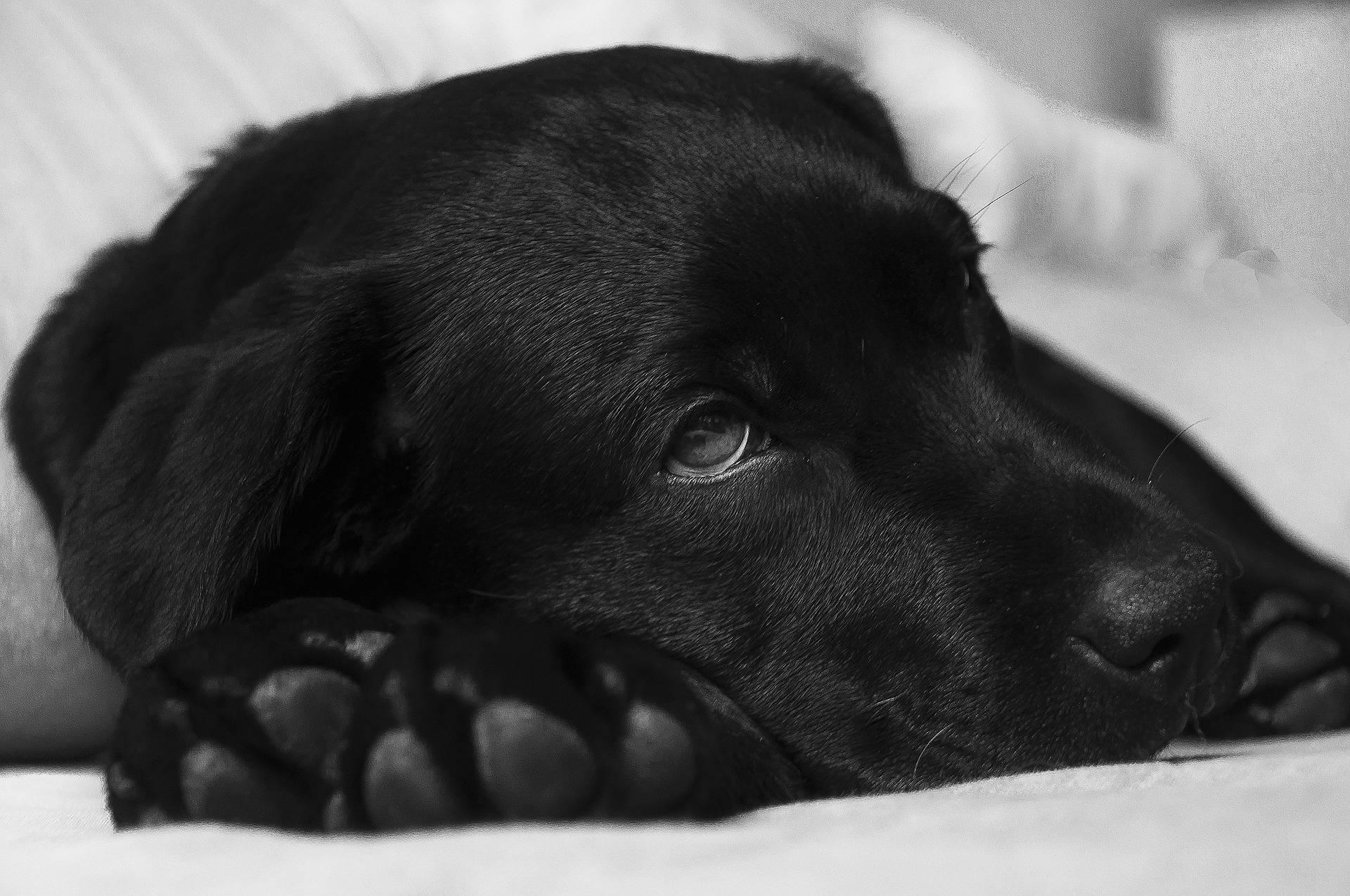 Futtermittelallergie beim Hund
