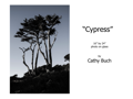 Cypress Photo on Glass