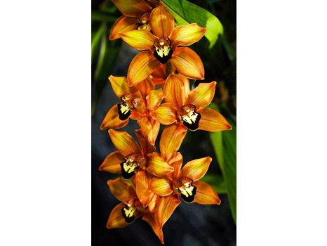 Eddie Sanderson Orchid photo on rolled canvas