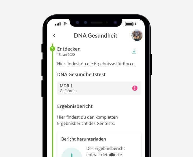 Ergebnis der Rassebestimmung des Hundes auf die vetevo App