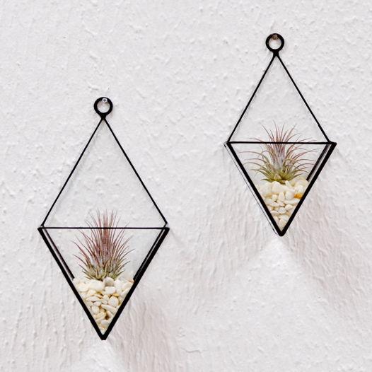 Флорариум с тилландсиями Твикс