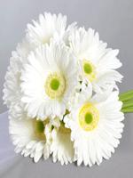 HF White Gerberas Bouquet
