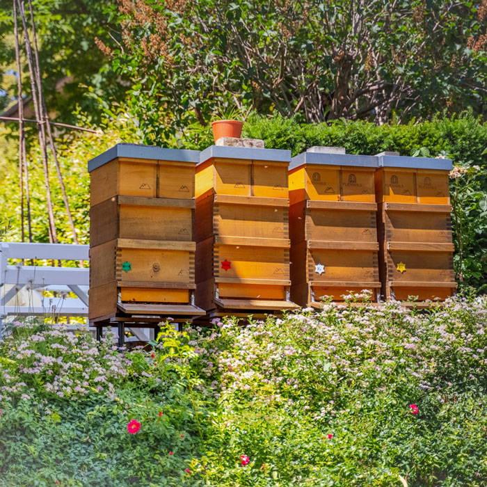 Vier Bienenvölker in Holzbeuten der Imkerei Fließgold
