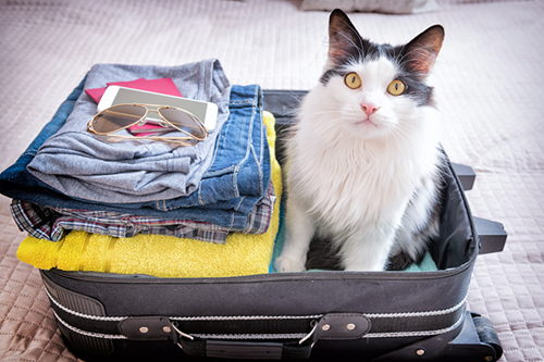 Image for Moving With Pets