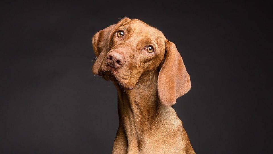 Impfung Hund - Titelbild