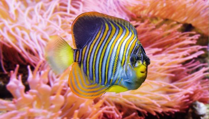 aquarium berlin kaiserfisch
