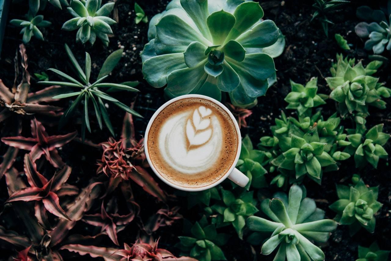 BeanBear coffee on forest floor