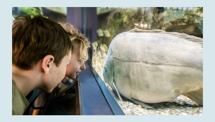naturkundemuseum potsdam kaltwasser aquarium