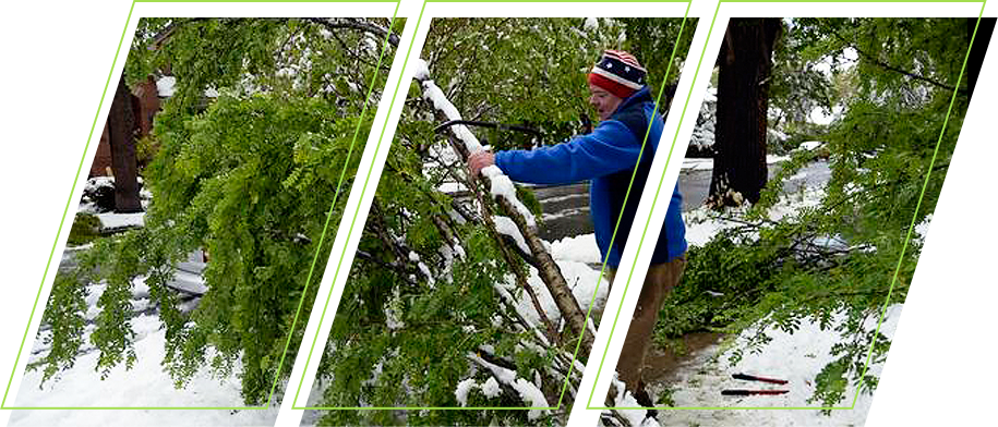 A man cleaning out his garden of dead trees in winter