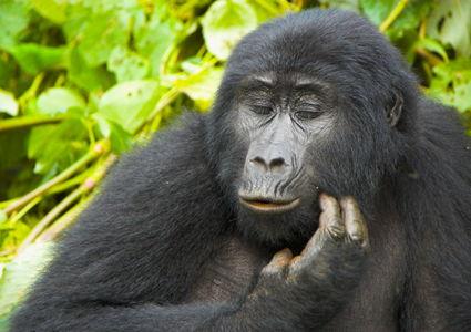 uganda-tours