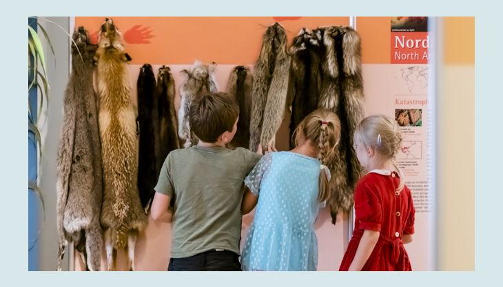 naturkundemuseum potsdam tierfelle
