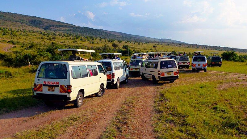 Safari vehicles on the hunt, Masai Mara, Kenya