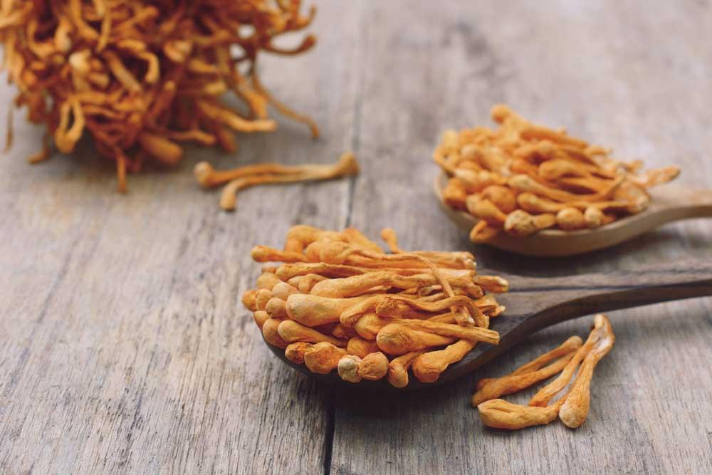 Cordyceps, medicinal mushroom for energy and stamina