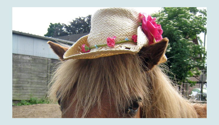 ponnyland pferd mit strohhut