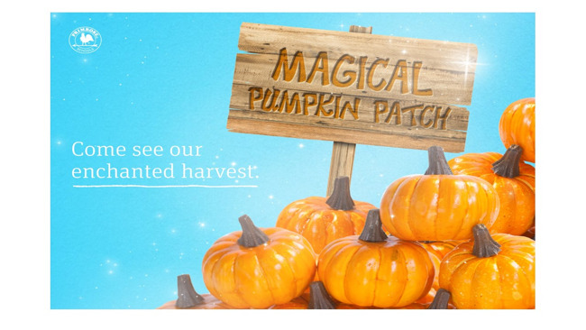 primrose harmony magic pumpkin seeds