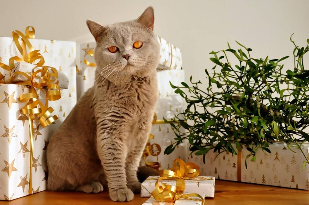what to get your cat for Christmas -Grey tubby cat in front of presents Image by Uschi Leonhartsberger-Schrott from Pixabay