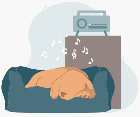 Music can help soothe a dog's anxiety