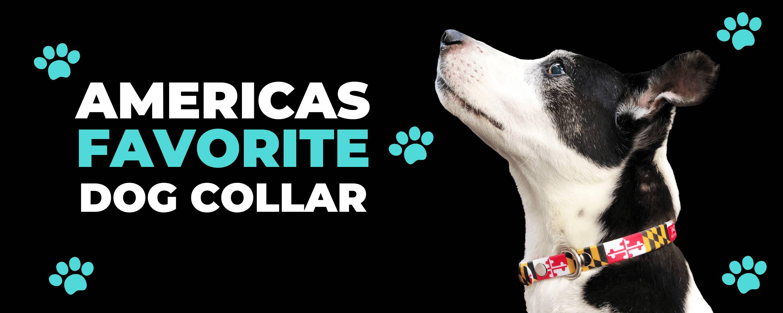 Dog in c4 americas favorite dog collar
