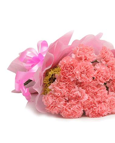HF Pink Carnation Surprise
