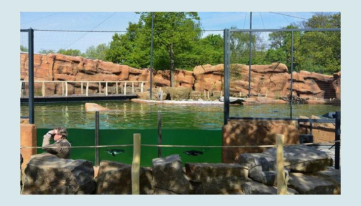 zoo krefeld pinguin pool
