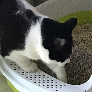 ViviPET Tofu Cat Litter Customer Review