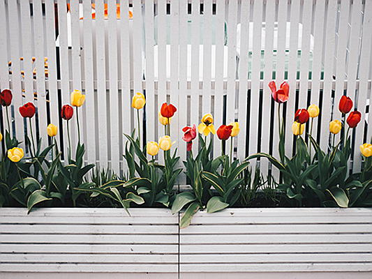 Luxembourg - A new garden fence means bringing your own creativity in line with local customs and regulations. Learn more in our blog post!