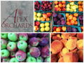 Apex Orchards - $40 Gift Card