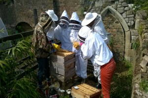 London Bee Keeping for a day